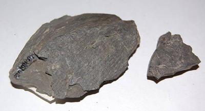 graptolite