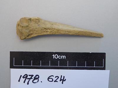 worked bone